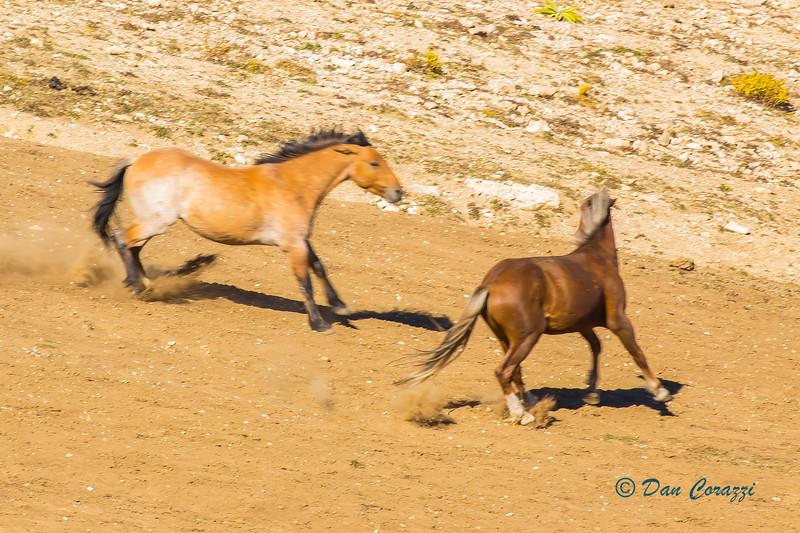 Duelng Mustangs 2-1aa.jpg
