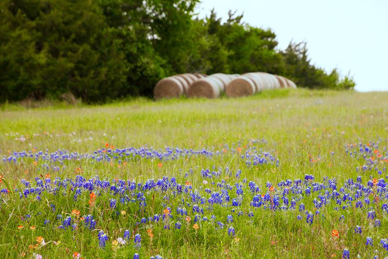 2016_4_9 Texas Wildflower Shoot-8549-2.jpg