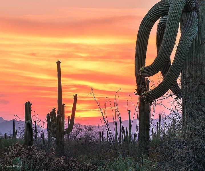 Desert Saguaro3.jpg