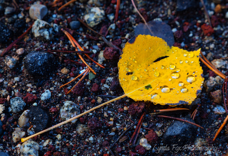 Leaf Kissed By Raindrops