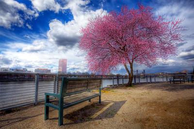 Springtime in Portland