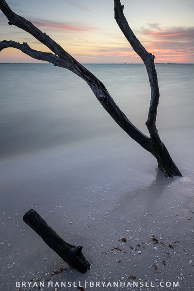 Sanibel Driftwood 10