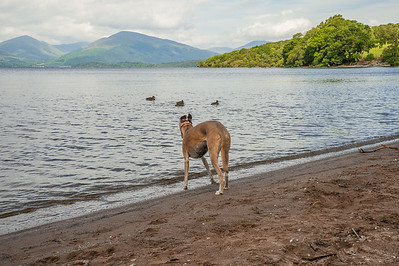 The Bonnie Banks of Loch Lomond - 18/07/2014