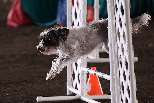 2018 Pacific  Northwest Tournament Toy Dog Agility