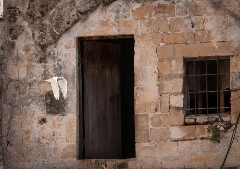 Israel_1456.jpg