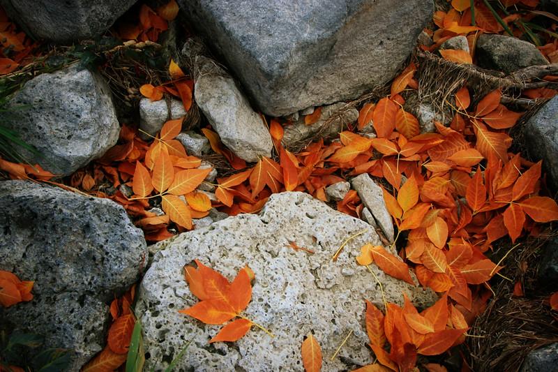 2007 October 07     IMG_0954.jpg