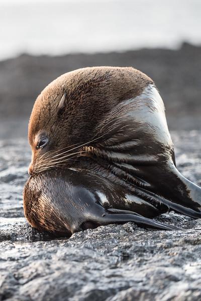 Galapagos-Best-095.jpg