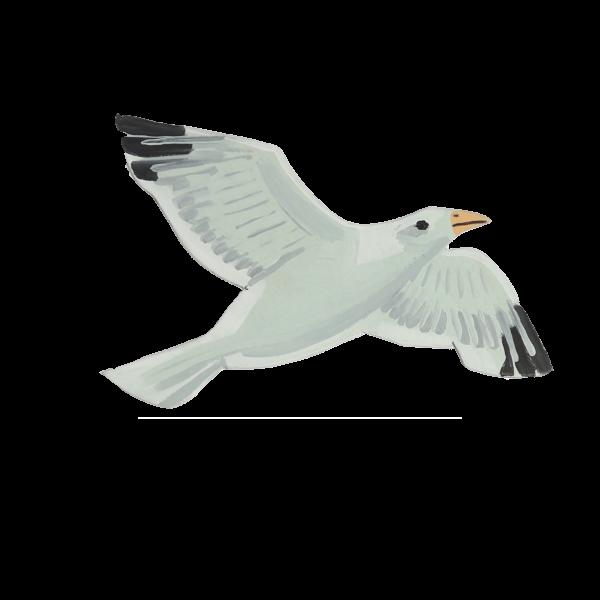 Bird-Seagull.png