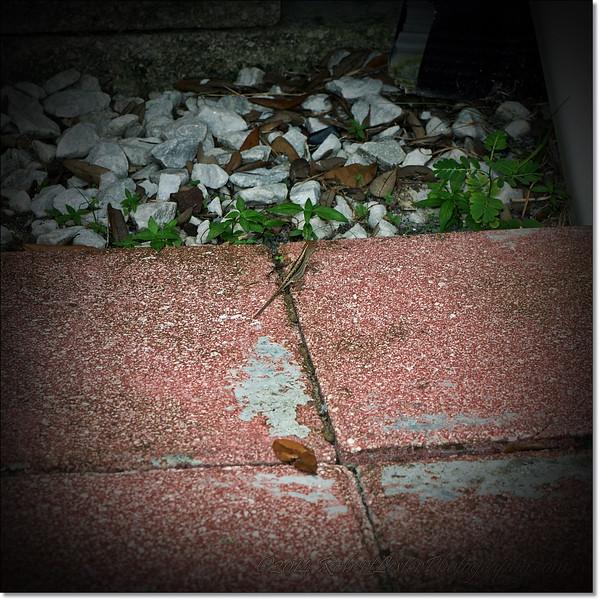 2014-10-03_P1260692_Around the house.jpg