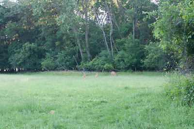 Deer in Rainbow Lit Field 6/23/10