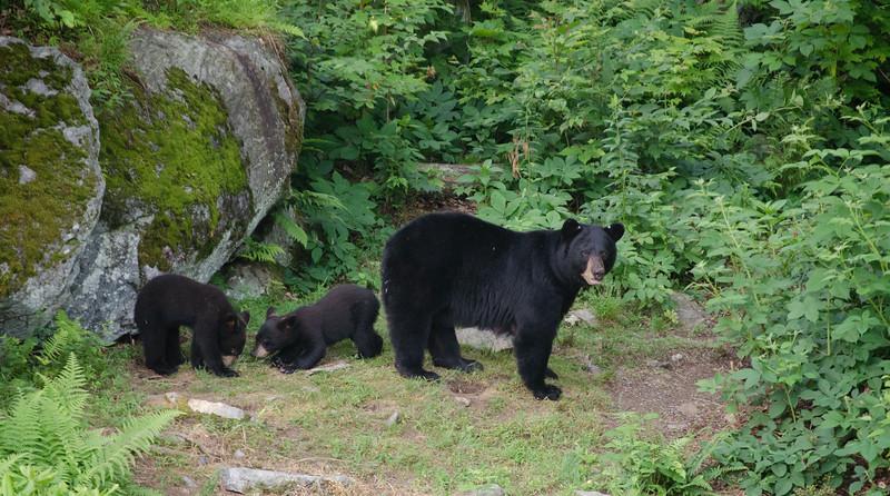 Black Bear-16-1.jpg
