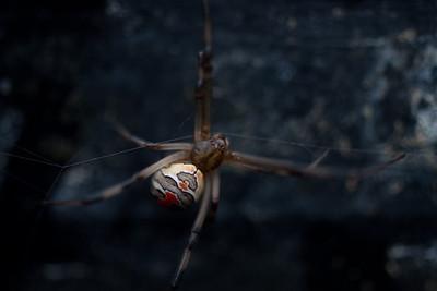 20110129 Garden Spider