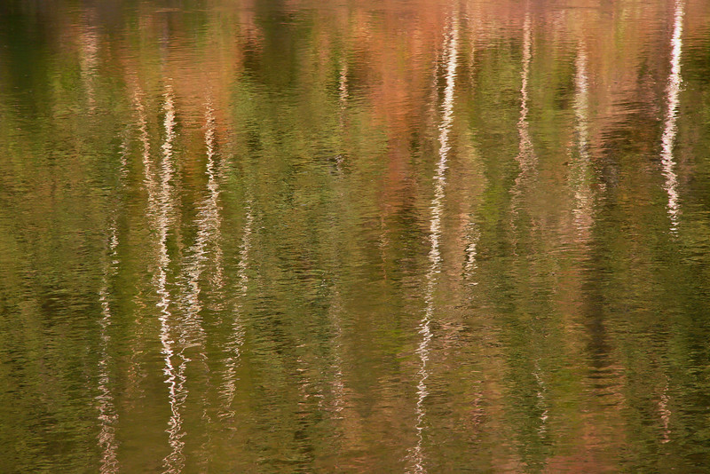 Reflections in the Pembina