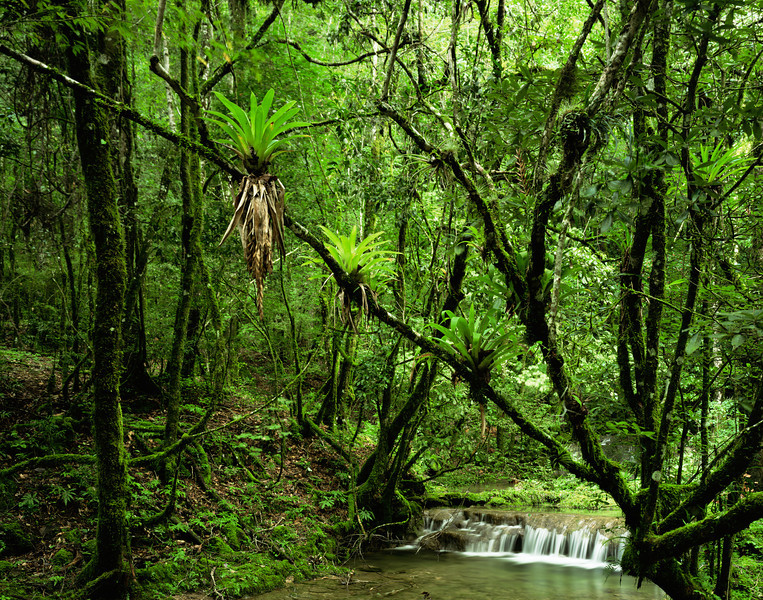 Tamaulipas, Mexico / El Cielo Biosphere Reserve cloud forest with Bromeliads growing in forest lining stream's series of  waterfalls.  1003H5