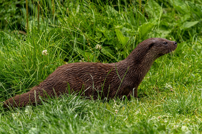 British Wildlife Centre_Z6-7368.jpg