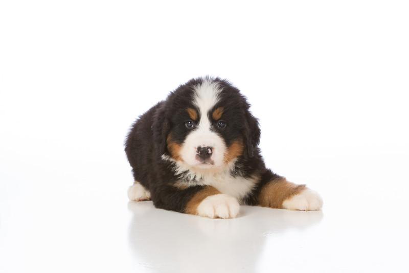 2013-Pearson Pups-Jun02-0216.jpg