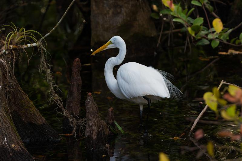 Everglades (9 of 60).jpg