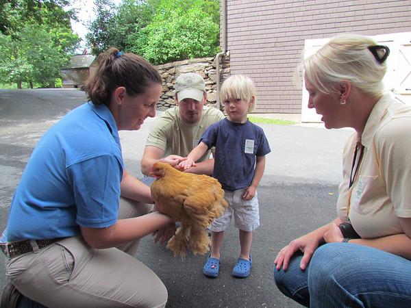 Chicken Days at Billings Farm