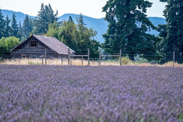 2018 Oregon Lavendar Valley