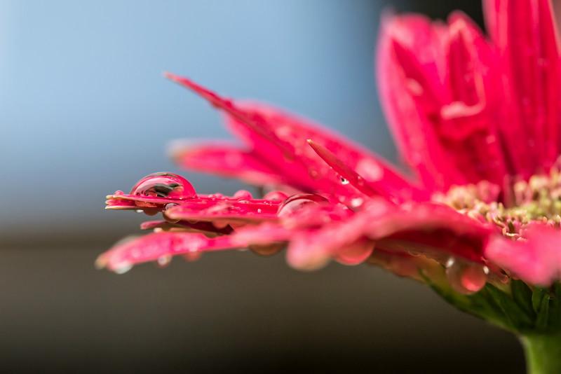 Flower-9573.jpg