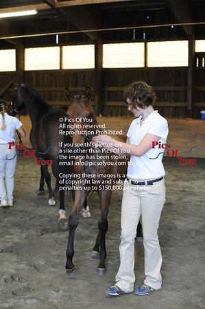 Foal entry 8