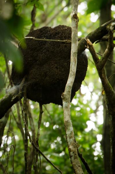 20131120_termite_nest_2.jpg
