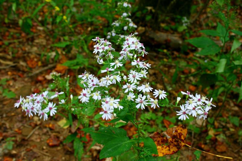 Pisgah Forest 9-30-12 83.jpg