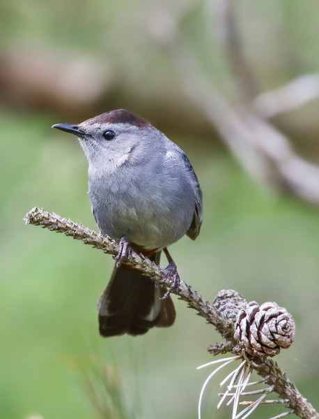 sumg bird 3.jpg