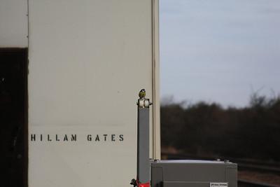 Hillam Gates