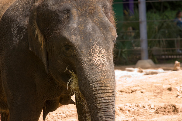 Houston Zoo Part 2