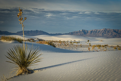 White Sands National Park, New Mexico  January 2021