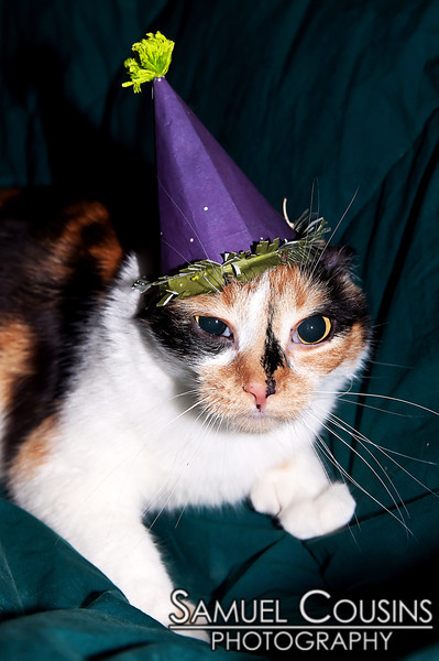Our cat, Penny, wearing a party hat.