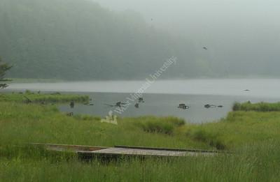 22735 Seneca Creek state scenes national forest