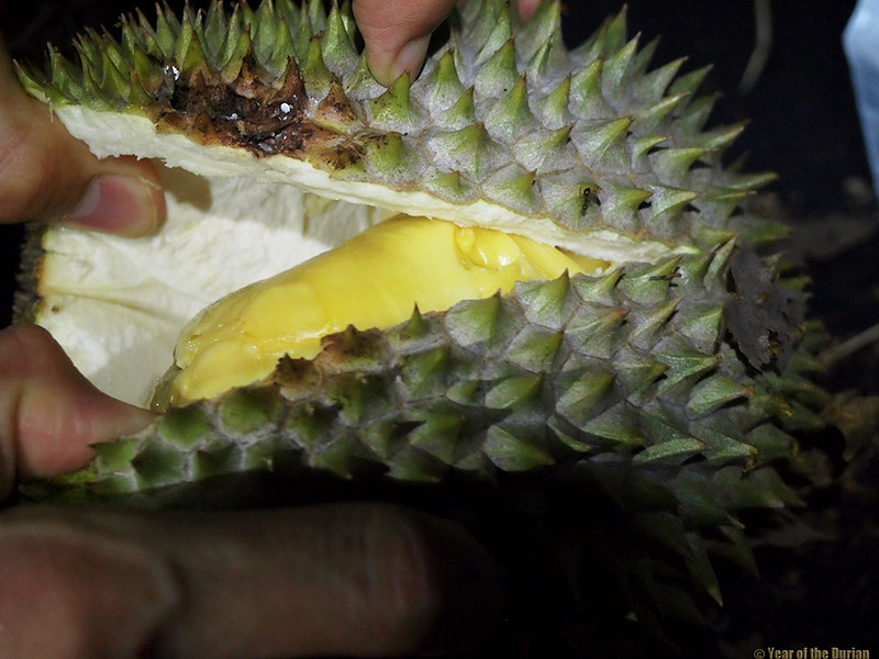 http://www.yearofthedurian.com/2015/08/durian-hunting-in-singapores-forbidden.html