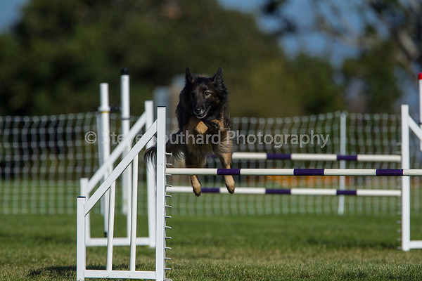 Del Monte KC Agility Trial June 3, 2018