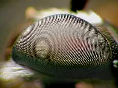 Danny Young's picture of a fly's. Taken with FZ10 and SLR lens
