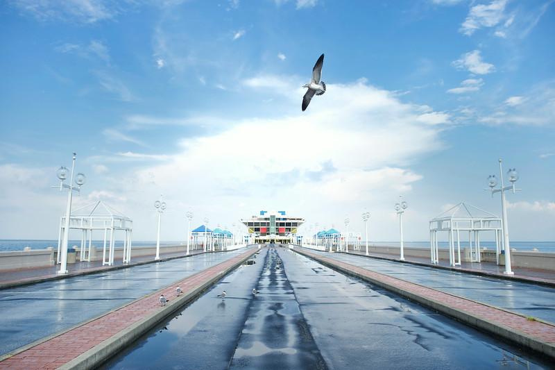 St Petersburg Pier Bird Soaring