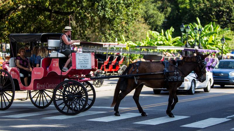 New Orleans Louisiana September 15, 2013-15.jpg
