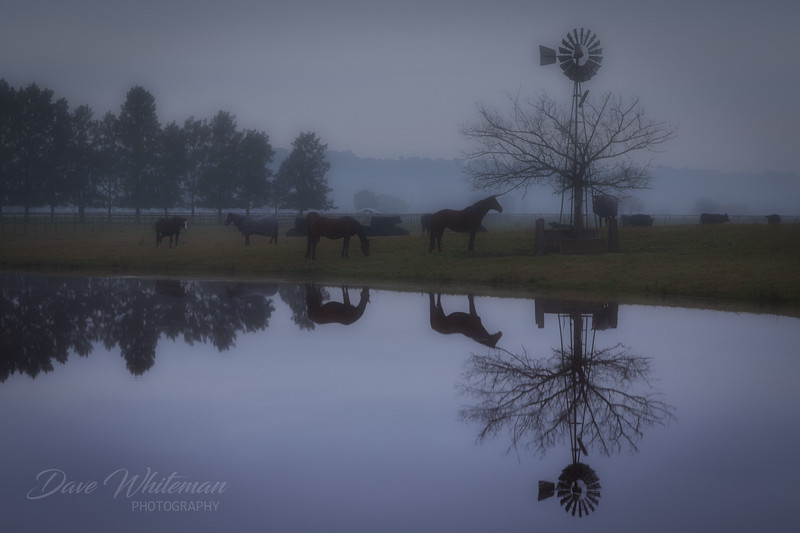 Fog in the Lowlands