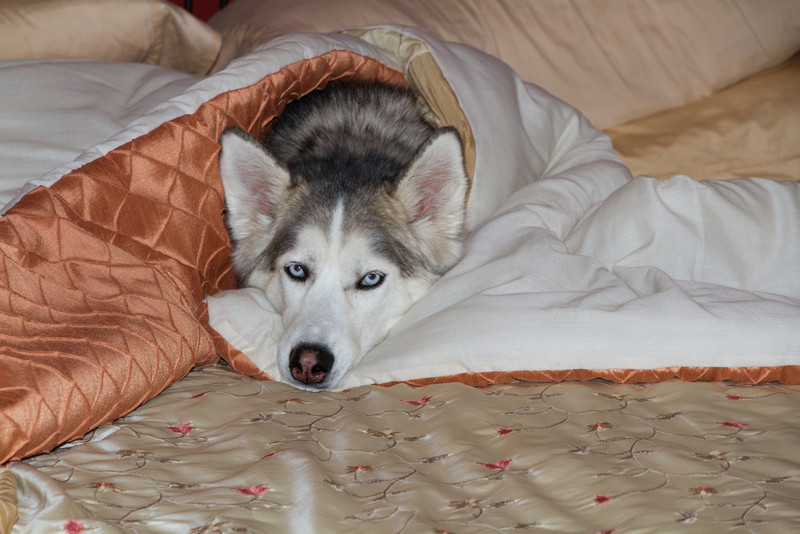 Blue under the covers