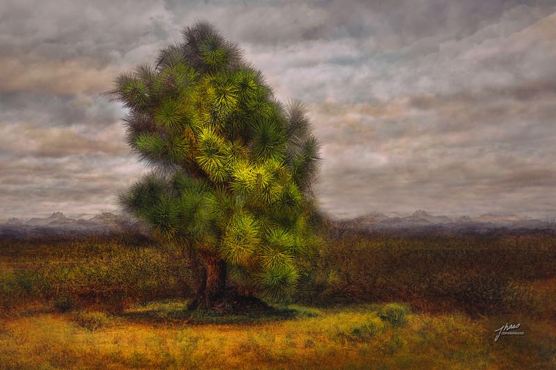 Yucca Tree - Yavapai Co, AZ.