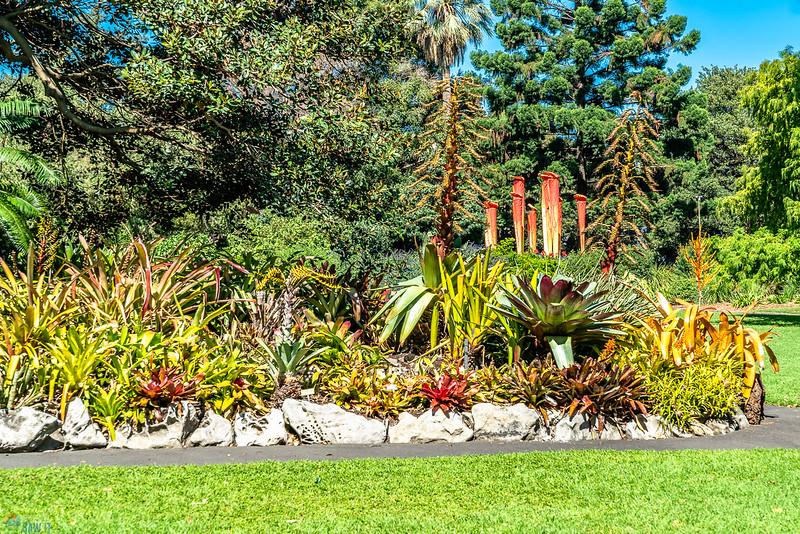 Royal-Botanic-Garden-1045.jpg