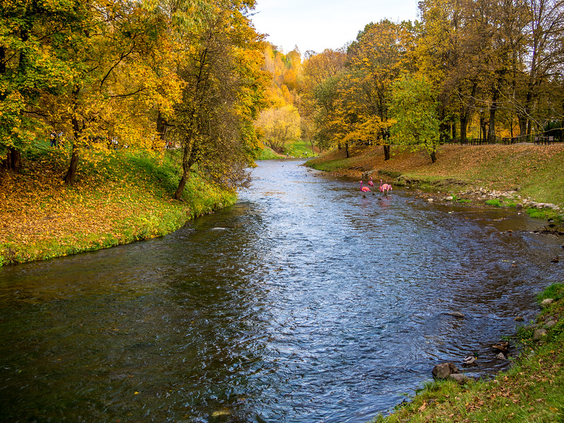 Autumn river in Vilnius, Lithuania
