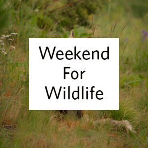 Weekend For Wildlife