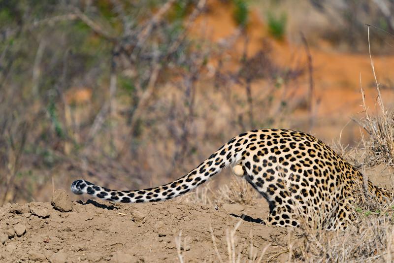 Safari-0110.jpg