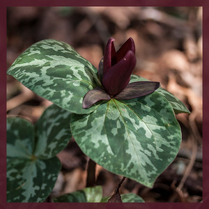 NCBG Spring Flora