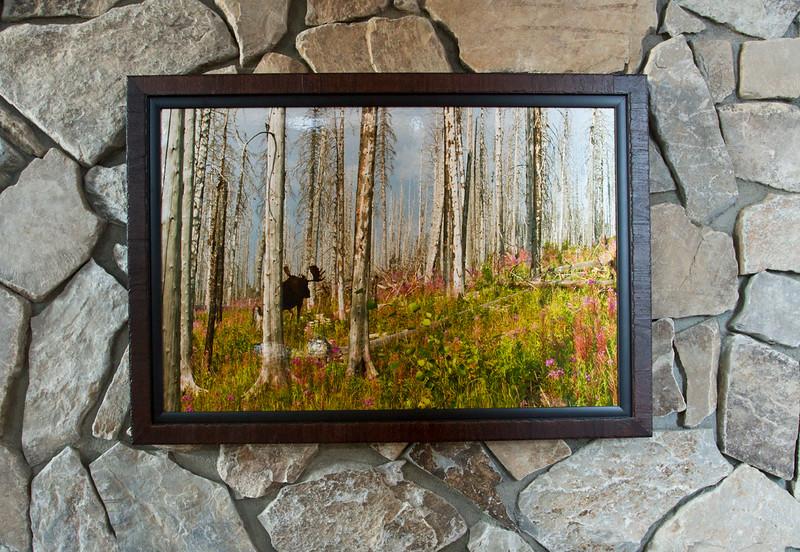 framedbullmoosefireweed.jpg