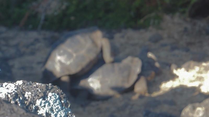 gay tortoise sex.mp4