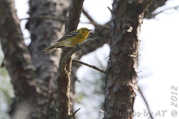 2012-03-27 Busch Wildlife CA