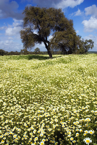 Andalusian springtime landscape